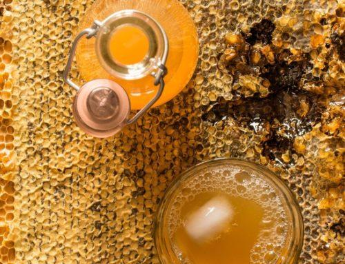 How to Make Jun Tea (Honey Kombucha)
