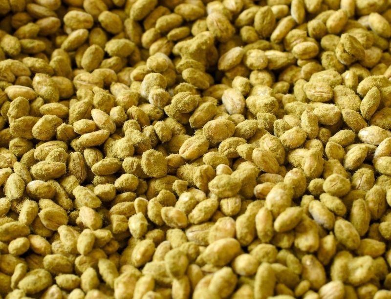Koji de riz vert avancé (sporulé, inutilisable)