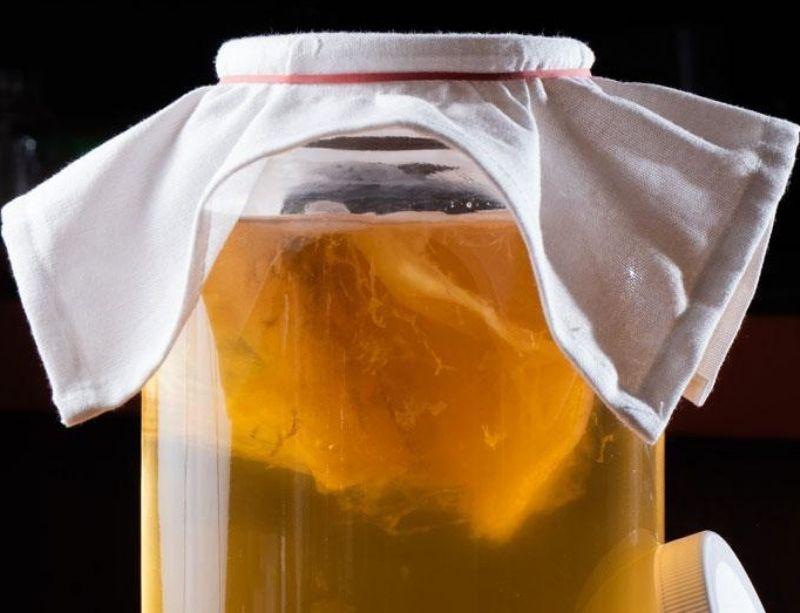 Kombucha fermenting in jar