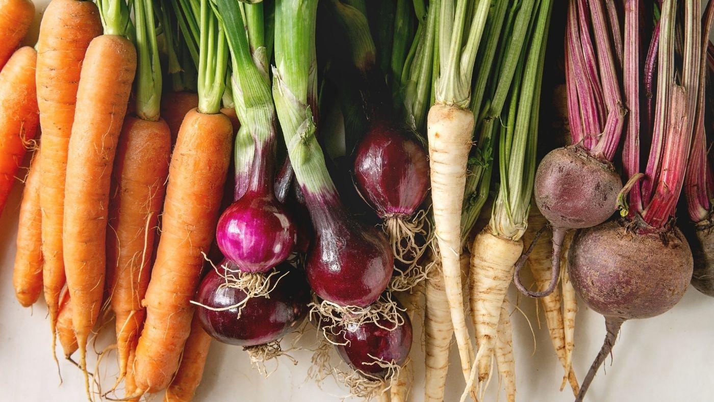 Winter Root Vegetables Fermentation Recipes