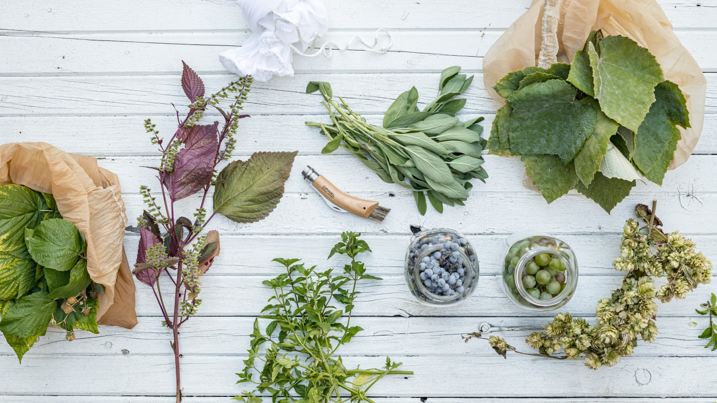 Making Fermented Drinks With Wild Local Plants